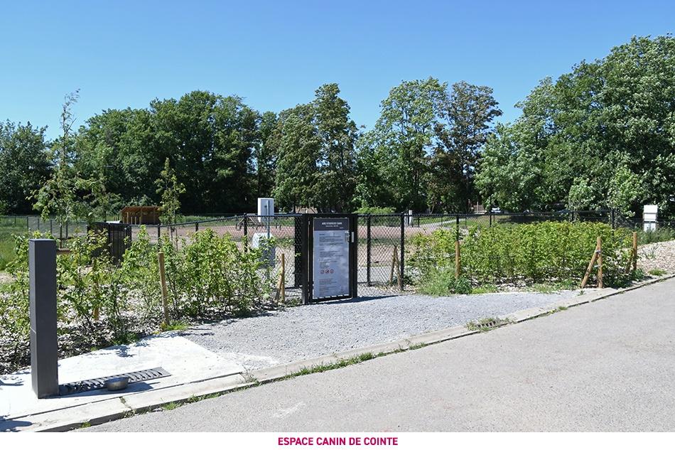 Le parc canin de Cointe