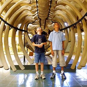 Galerie - L'Aquarium - Museum