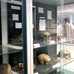 Galerie - Le Musée d'Archéologie Préhistorique