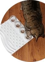Mise au défi de votre chat