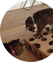 Les jeux pour votre chat