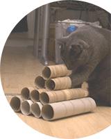 Sport cérébral pour votre chat