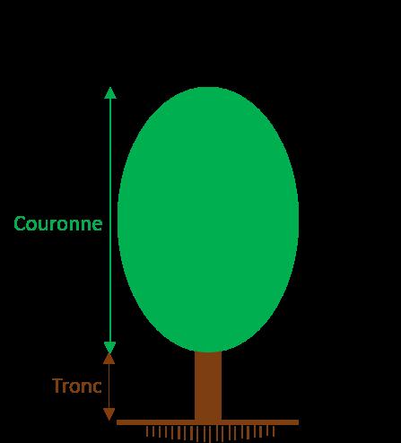 Dimensions d'arbre