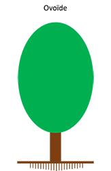 Port ovoïde