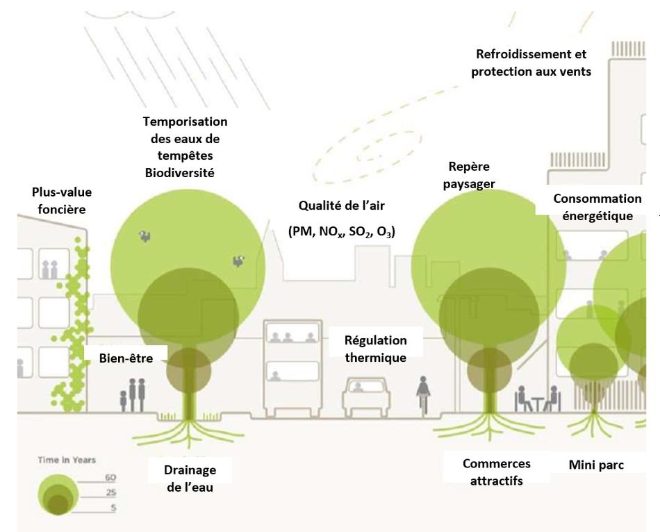 Services rendus par les arbres urbains